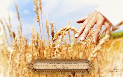The Harvest Is Plentiful
